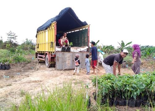 Sewa Truk Surabaya Palangkaraya