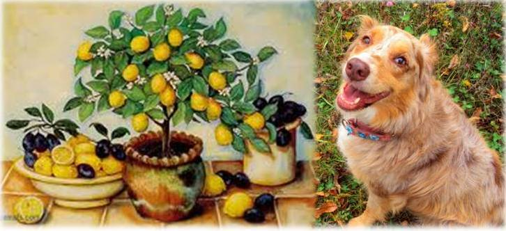 What S A Good Homemade Food Diet For Dogs With Uti