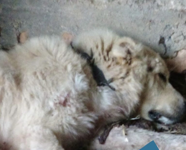 Τραυμάτισε με κυνηγετικό όπλο τσοπανόσκυλο - Αναζητήσεις του δράστη και στην Αργολίδα