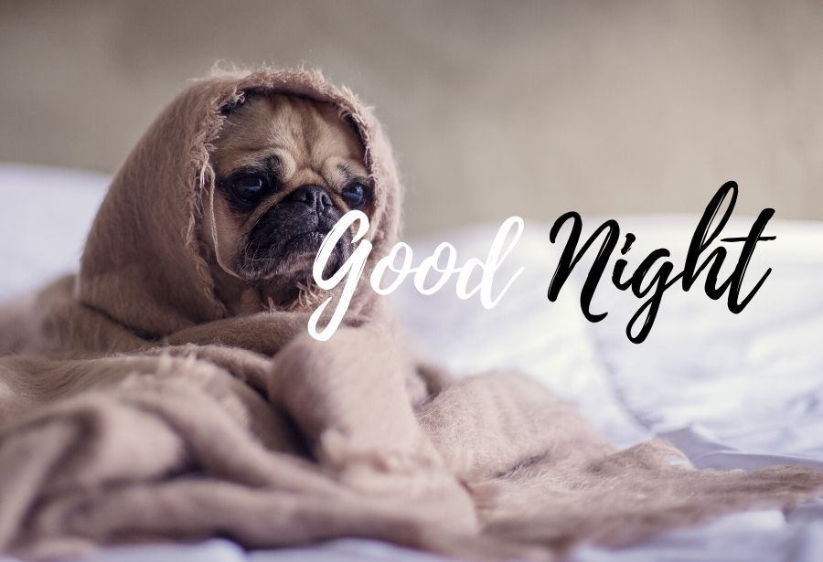 Good Night Sleeping BullDog on Bed