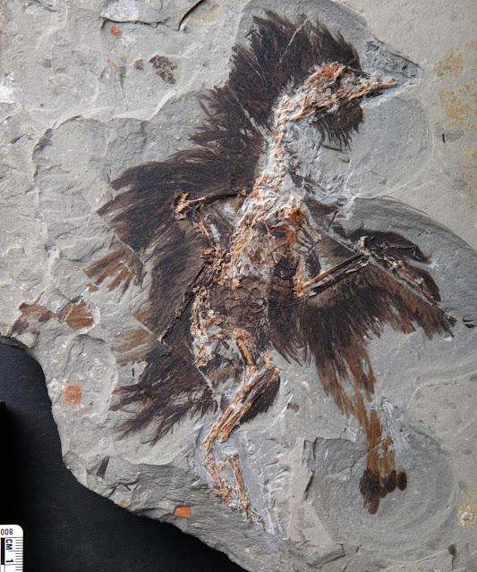Scientists make new discovery about bird evolution