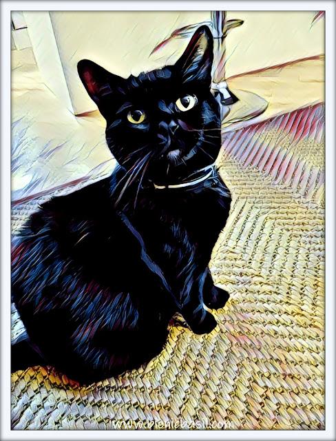 Panfur Parsley's Epic Selfie  Caturday Art black cat house panther