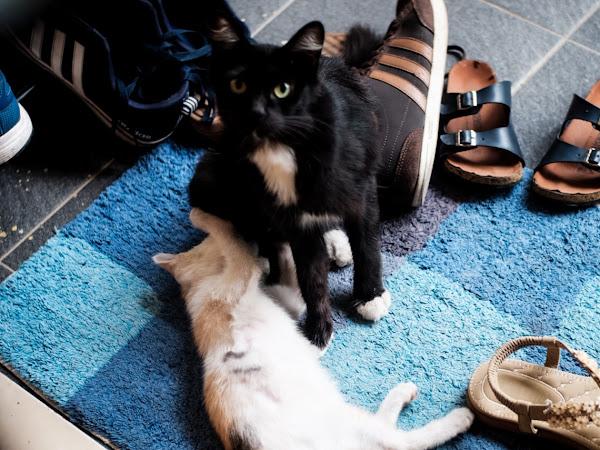 Kekeluargaan Kucing Bikin Pusing