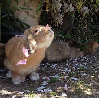 kelinci menyukai tempat tenang