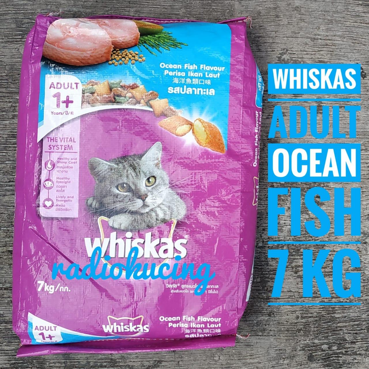 Review Makanan Kucing Dry Food Whiskas Adult Ocean Fish