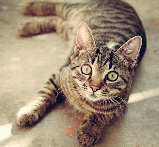 Tigrooo Katzenstreu im Angebot