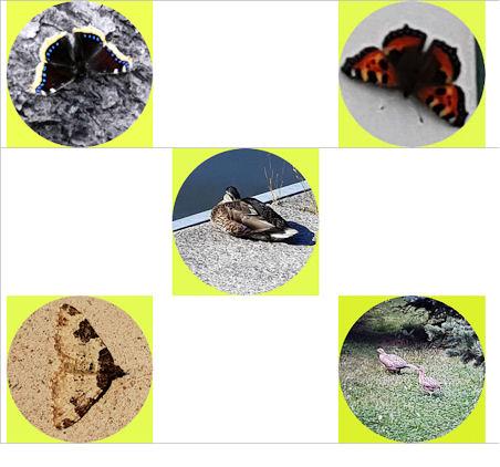 Kuvassa muutama perhonen ja pari lintua pienennettyinä, ei nimettyinä