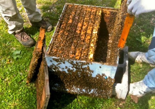 Μελισσοκομικοί Χεισμοί Μαίου: Ένας επικίνδυνος μήνας για πολλούς λόγους