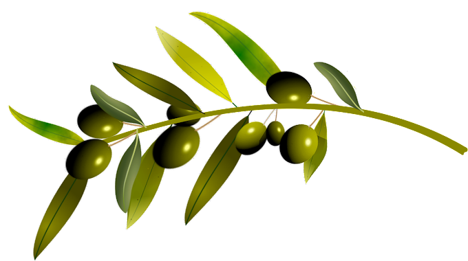 About Olive Oil in hindi. जैतून का पेड़. World olive tree day.