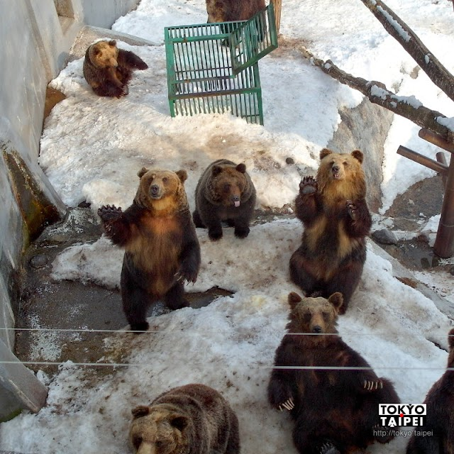 【登別熊牧場】搭纜車上山看湖 餵食感覺餓很久的熊熊