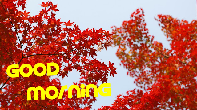 good morning images red