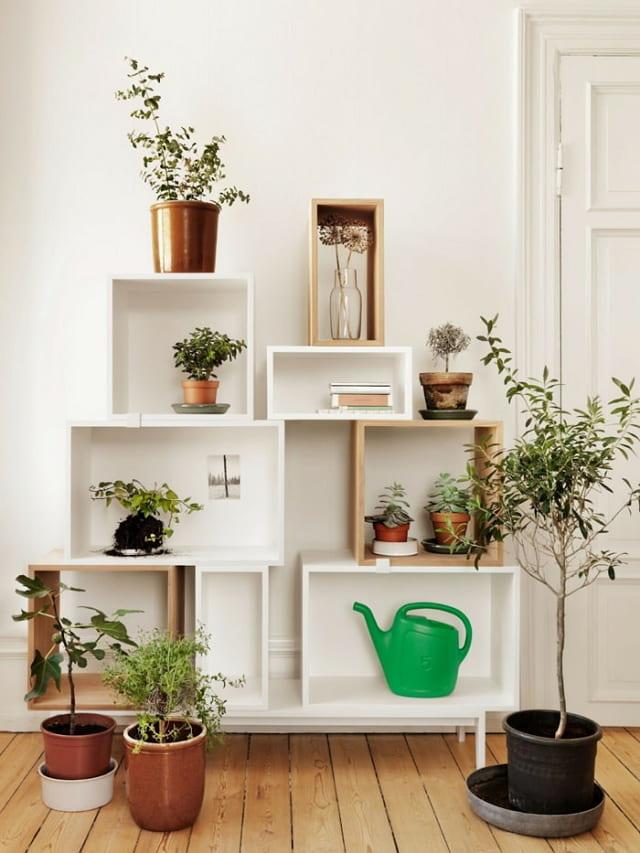 gambar tanaman hias rak buku