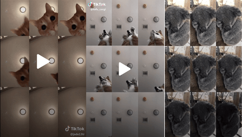 Flex your Furbabies: Tiktok has tips for Pinoy pet-owners in creating viral memes