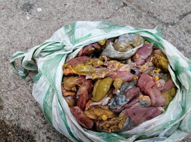 Decomisados 40 kilos de carne de tortuga en Riohacha