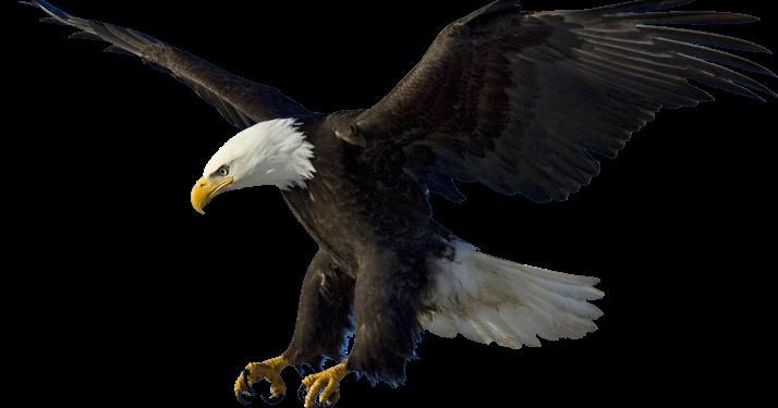 Préférence Exposé sur L'aigle AN52
