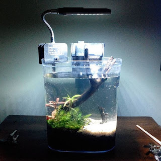 Aquascape Mini