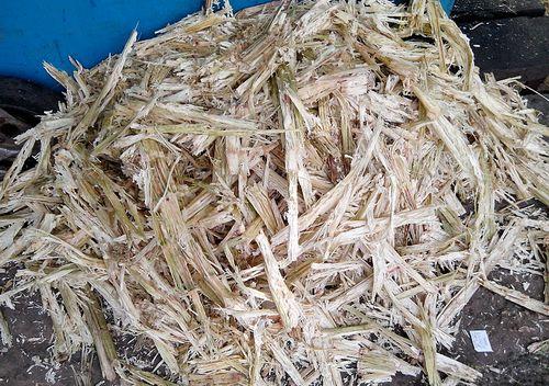Sugarcane bagasse