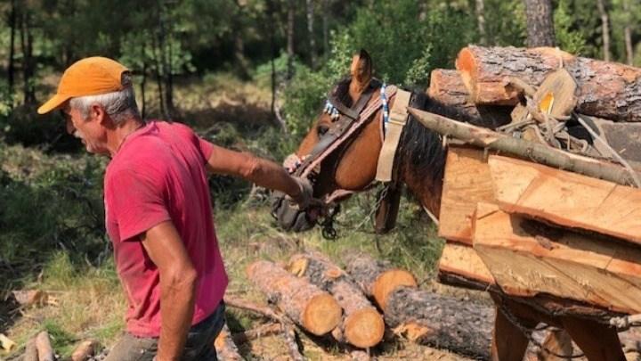 Παράταση στην προθεσμία προσαρμογής των Δασικών Συνεταιριστικών Οργανώσεων