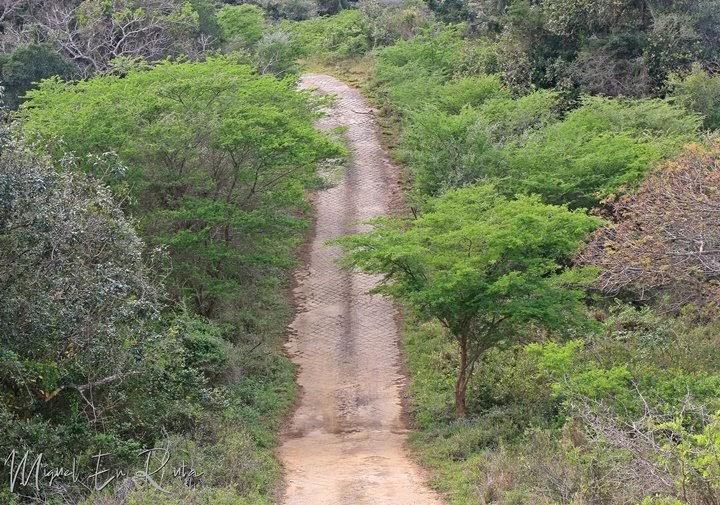 Safari-Isimangaliso