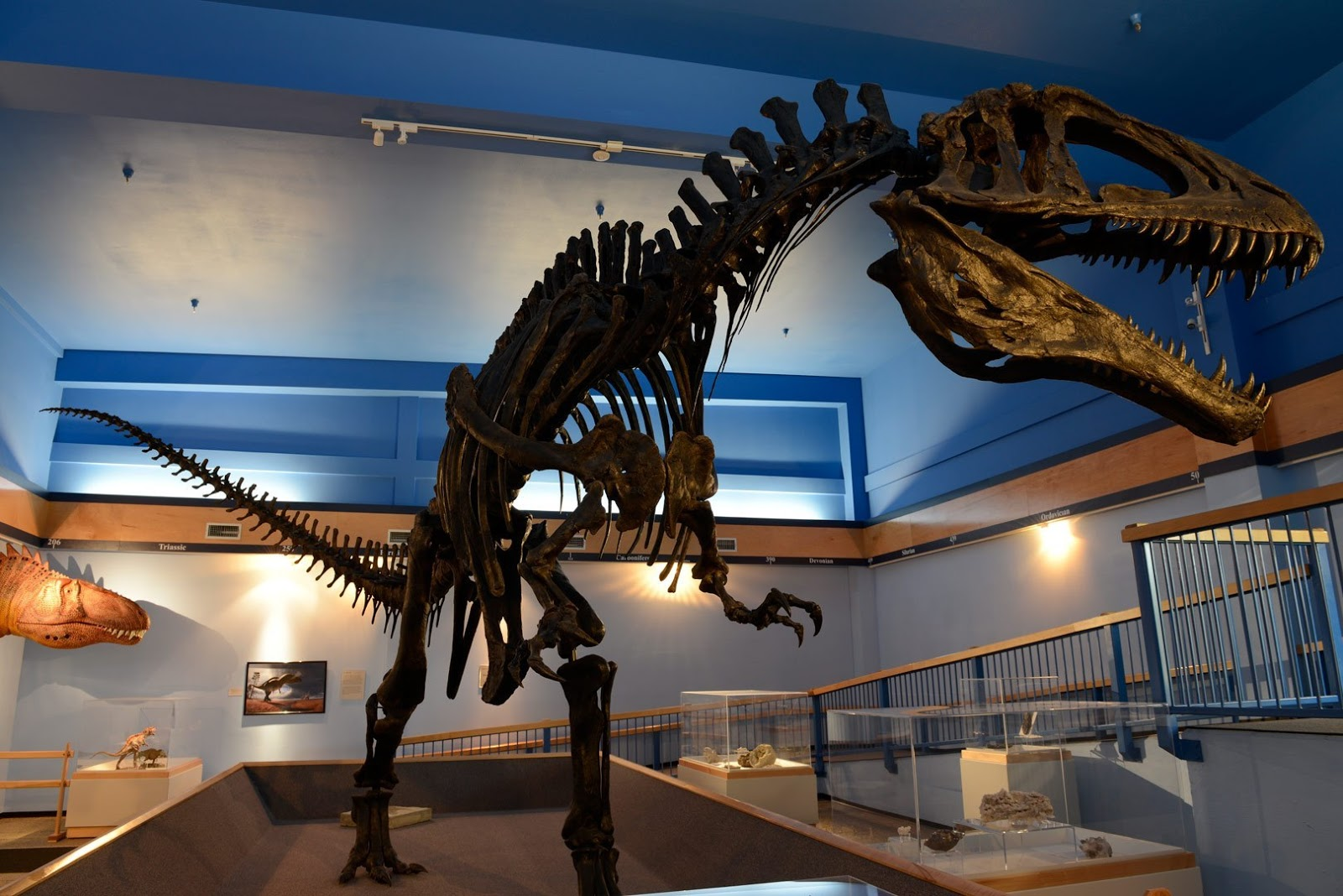 Dinosaur gallery with Atoka fossil set to reopen for first time in 3 years at Museum of the Red River in Idabel after renovation