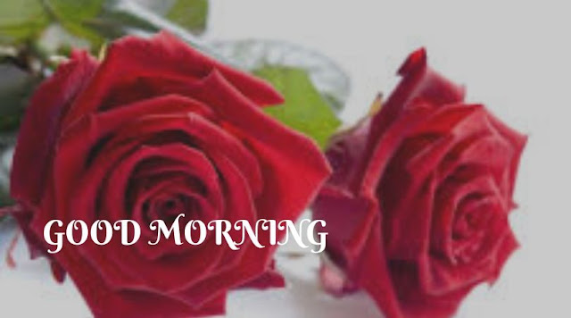 good morning and rose images
