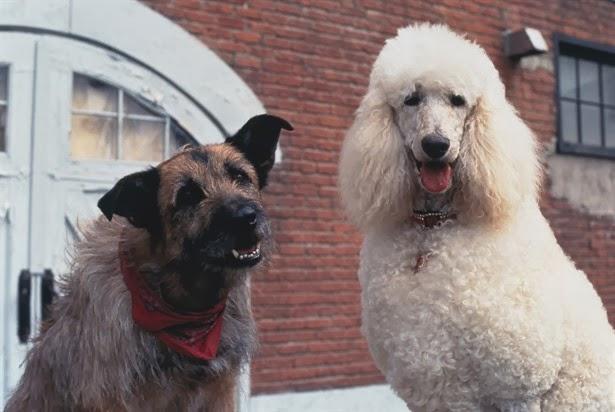 Dog Side Stories: Οι σκύλοι στον κινηματογράφο και την