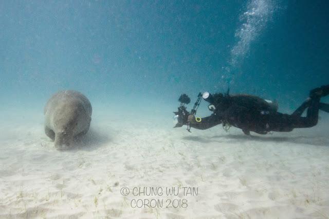 Learn Scuba, Manila, Diving, Underwater Dugong, PaparazSea