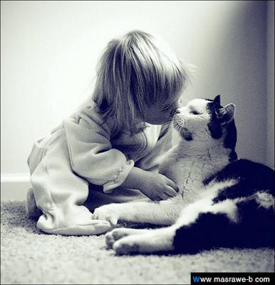 صور صور قطط كيوت 2020 خلفيات قطط جميلة جدا cats46.png