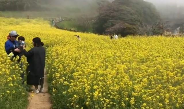 karakteristik dan ciri-ciri musim semi di korea
