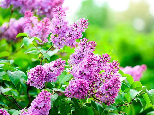 Amazing Fragrant Plants