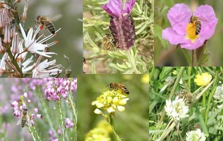 Η μελισσοκομική χλωρίδα της Πελοποννήσου και τα ιδιαίτερα χαρακτηριστικά της Αργολίδας