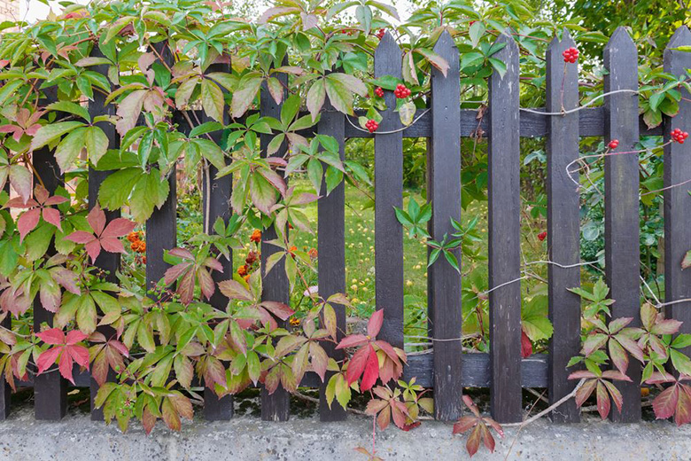 5 Best Vegetable Garden Fence Ideas
