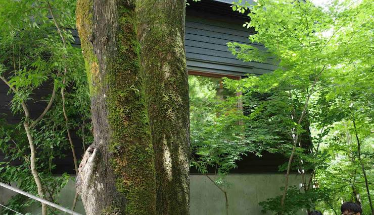 木立の中に佇む木造建てのお店