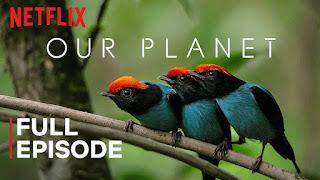 Serie documental Nuestro Planeta Online