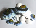Genuine Wonder Shells
