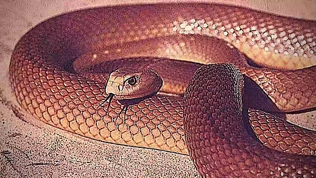 facts about the snakes