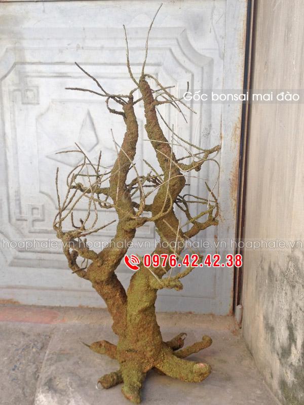 Gốc mai đào thế huynh đệ | Gốc bonsai mai đào