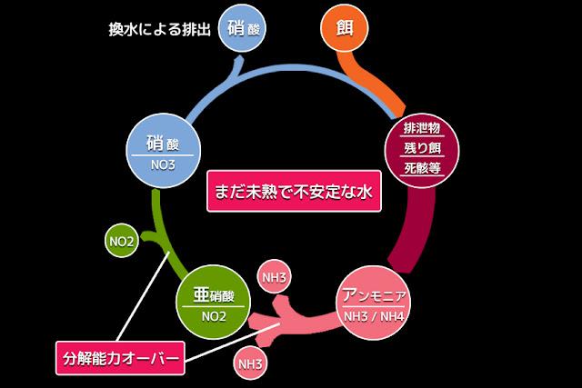 図3 不安定なバクテリア