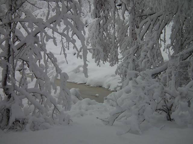 lumi, marraskuu, kotipiha, pyhäjoki, tykkylumi