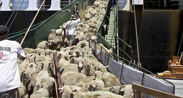Ποτέ κανένα πρόβατο δε σώθηκε βελάζοντας από τη σφαγή