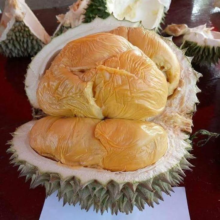 bibit durian musang king bibit durian bibit durian musangking Tangerang
