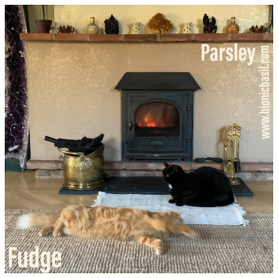Parsley and Fudge - Life In Front Of The Fire ©BionicBasil® The Pet Parade 325