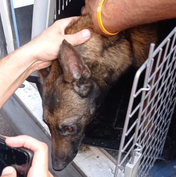Los Bomberos rescatan un perro en Santa Cruz de La Palma