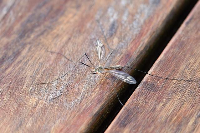 come alleviare puntura di zanzara