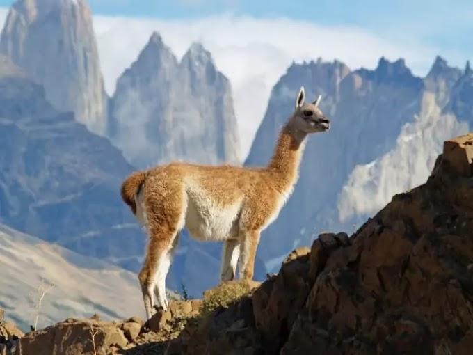 5 забавных животных Южной Америки