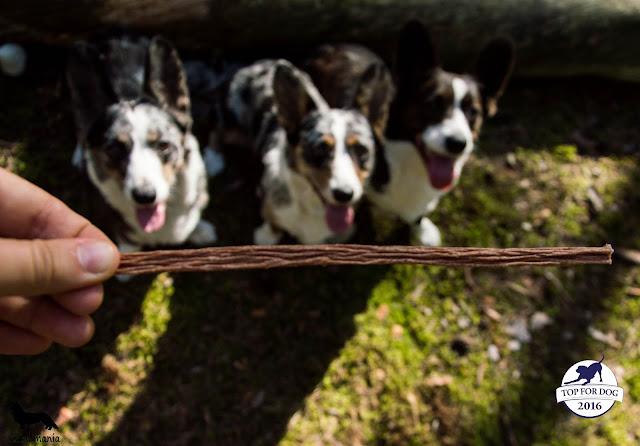 przysmaki dla psów, smaczki dla psówm, smaki dla psów, nagrody dla psów, nagródki, treningówki, smaki, smaczki, smakołyki