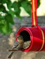 http://www.manualidadesblog.com/comederos-para-aves-silvestres/