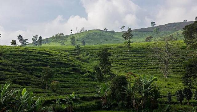 pengalaman di tea garden resort, pengalaman menginap di tea garden resort, pengalaman tea garden resort