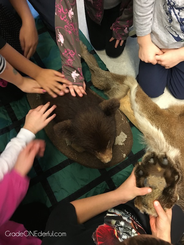 Petting a stuffed bear. Bear studies in a grade 1 class.