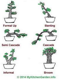 Bonsai Shapes